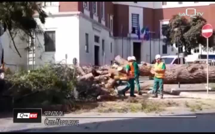 PESCARA. CADE UN ALBERO IN PIAZZA ITALIA
